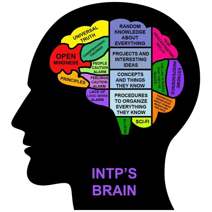 INTP's brain.jpg
