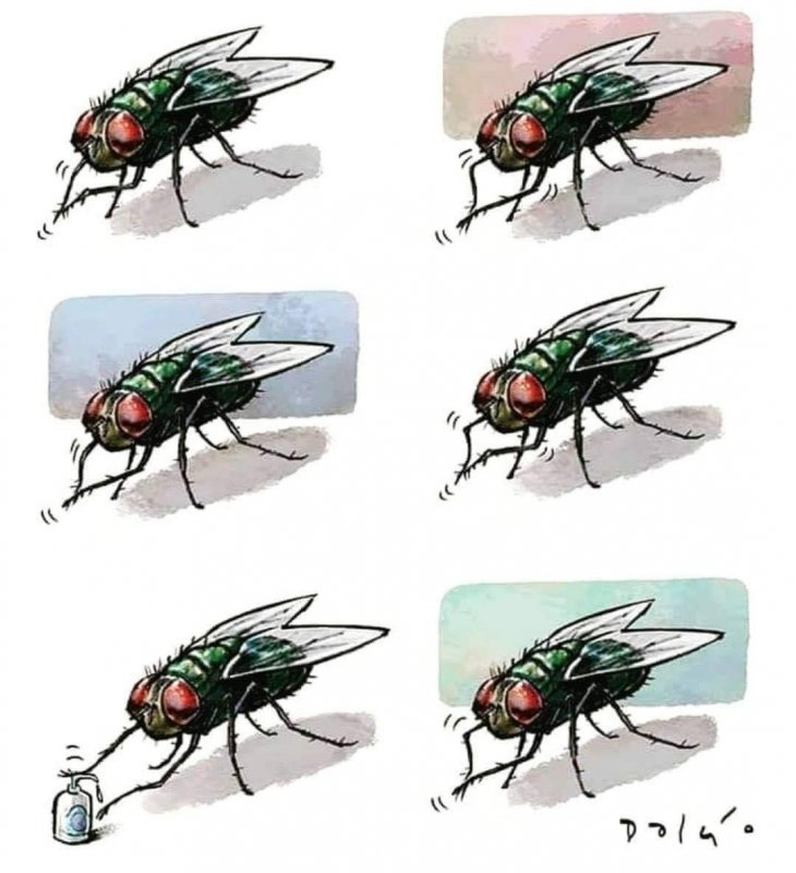 flies.thumb.jpg.43a0afbe51ce9db57ab9ecfdf10befac.jpg